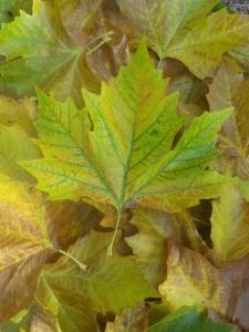 Feuilles d'automne, futures moulages céramiques pour Pascale Elghozi